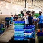 La venta online de pescado superó el 200% el año 2020